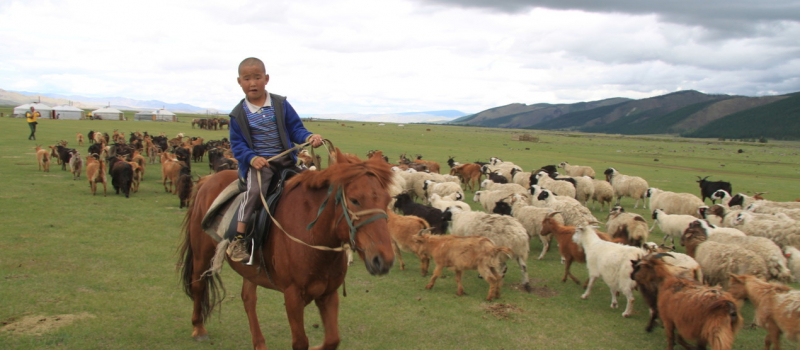 mongoli-1